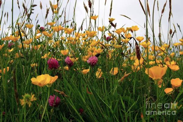 Photograph - Wildflowers by Jeremy Hayden