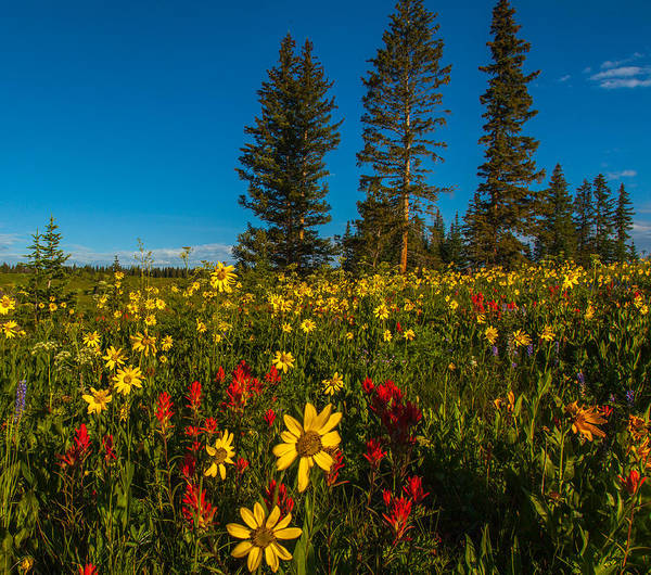 Photograph - Wildflowers  by Kevin  Dietrich