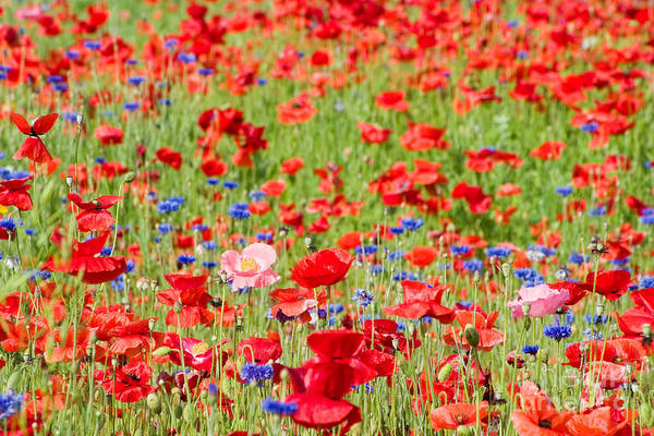 Photograph - Wildflowers by Larry Landolfi