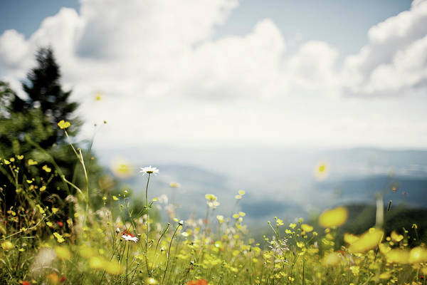 Waitsfield Photograph - Wildflowers On A Ski Trail by Corey Hendrickson