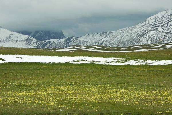 Alpine Meadows Photograph - Wildflowers On Campo Imperatore by Bob Gibbons