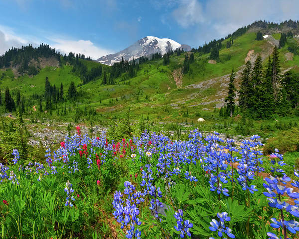 Ecosystem Photograph - Wildflowers On Meadows by Tom Norring