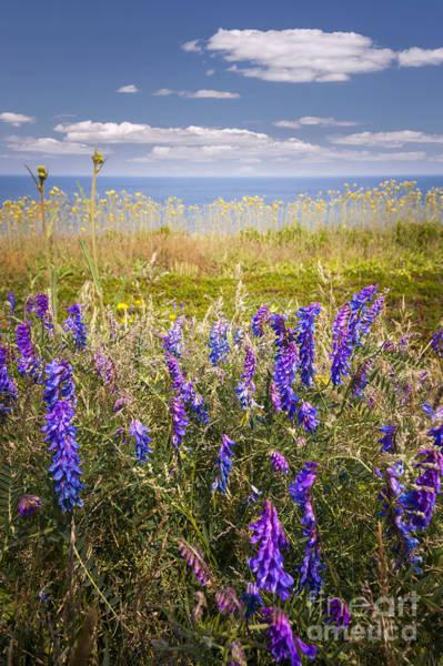 Wall Art - Photograph - Wildflowers On Ocean Coast by Elena Elisseeva