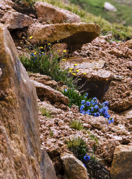 Photograph - Wildflowers On Pikes Peak by Greg Reed