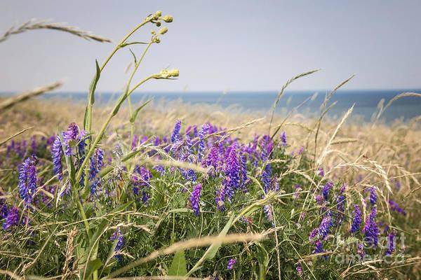 Wall Art - Photograph - Wildflowers On Prince Edward Island by Elena Elisseeva