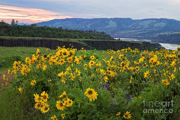 Photograph - Wildflowers On The Columbia River Gorge by Stuart Gordon