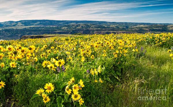 Photograph - Wildflowers by Stuart Gordon