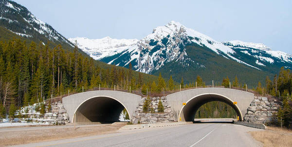 Photograph - Wildlife Bridge by Guy Whiteley