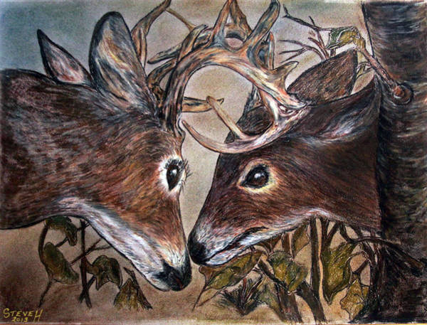 White Tailed Deer Drawing - Wildlife In Action by Stephen Helton