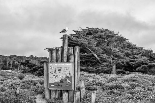 Photograph - Wildlife On 17 Mile Drive by Priya Ghose