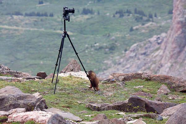 Photograph - Wildlife Photographer by Jim Garrison