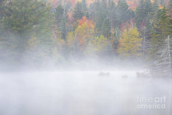 Photograph - Wildlife Pond - Bethlehem New Hampshire Usa by Erin Paul Donovan