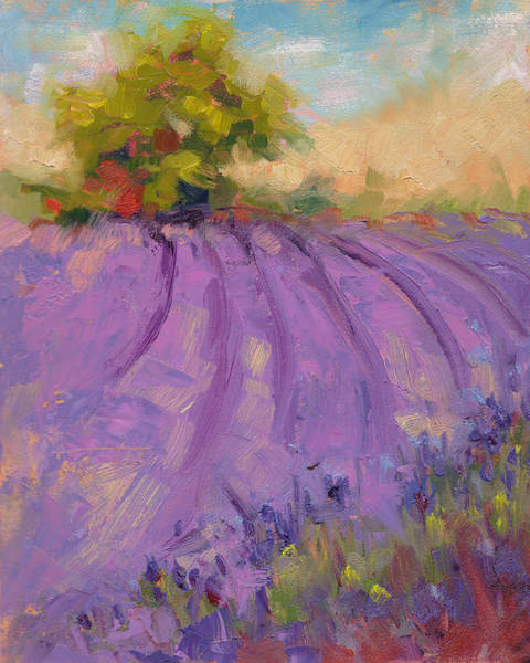 Painting - Wildrain Lavender Farm by Talya Johnson
