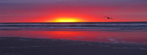 Photograph - Wildwood Sunrise Dreaming by David Dehner