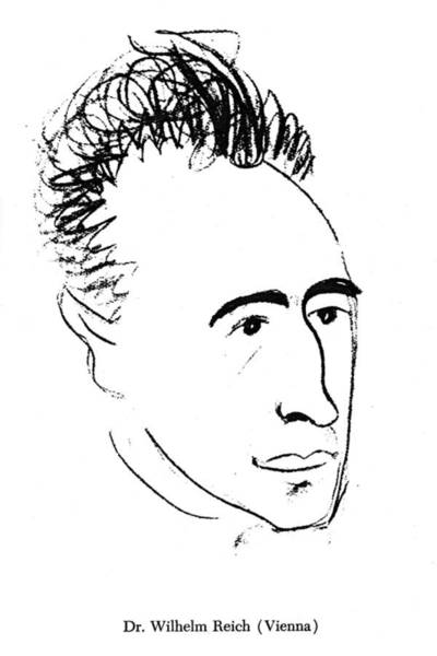 1924 Drawing - Wilhelm Reich (1897-1957) by Granger