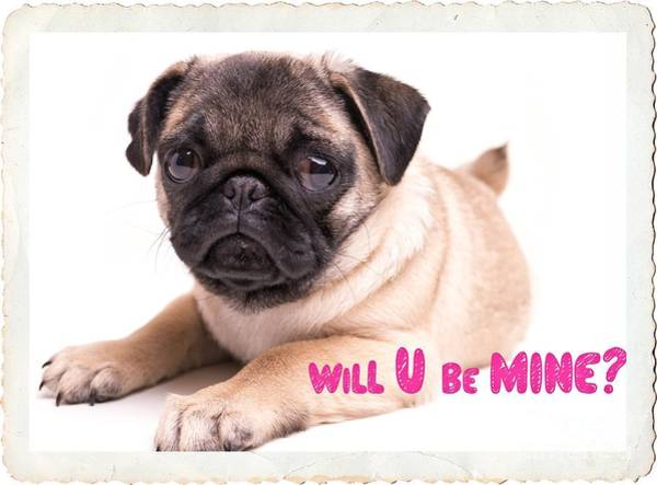 Dog Lover Photograph - Will U Be Mine? by Edward Fielding