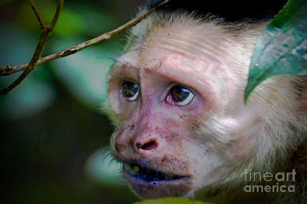 Cahuita Photograph - Will Work For Food by Gary Keesler