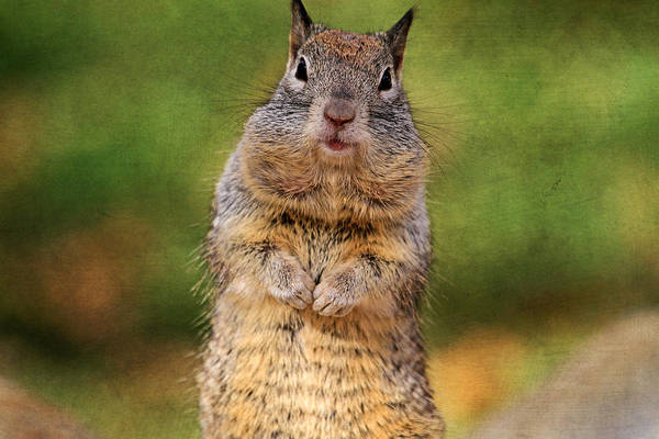Canon 7d Photograph - Will Work For Peanuts by Donna Kennedy