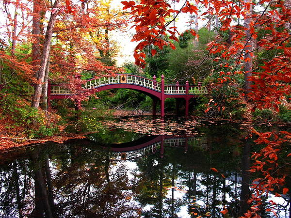 William And Mary Photograph - William And Mary College  Crim Dell Bridge by Jacqueline M Lewis