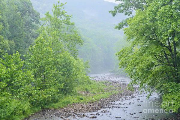 Trout Stream Photograph - Williams River Summer Rain by Thomas R Fletcher