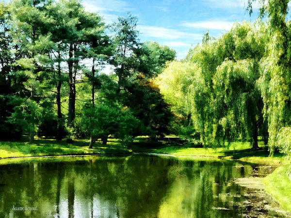 Photograph - Willow By The Lake by Susan Savad