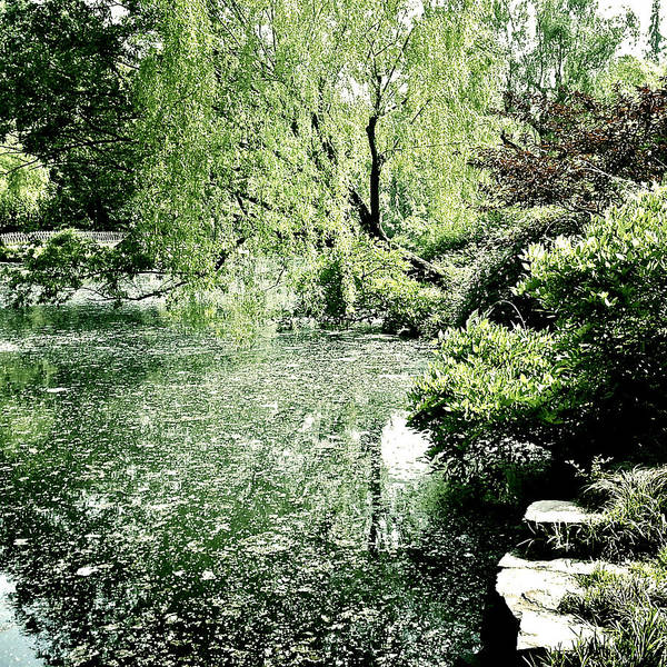 Photograph - Willow Overture by HweeYen Ong