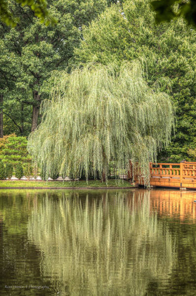 Photograph - Willow by Ross Henton