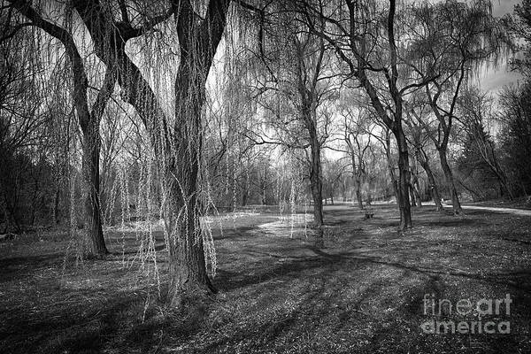 Scarborough Photograph - Willows In Spring Park by Elena Elisseeva