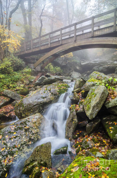 Wall Art - Photograph - Wilson Creek Mist by Anthony Heflin