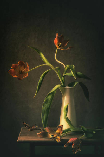 Vases Photograph - Wilted Tulips by Monique Van Velzen