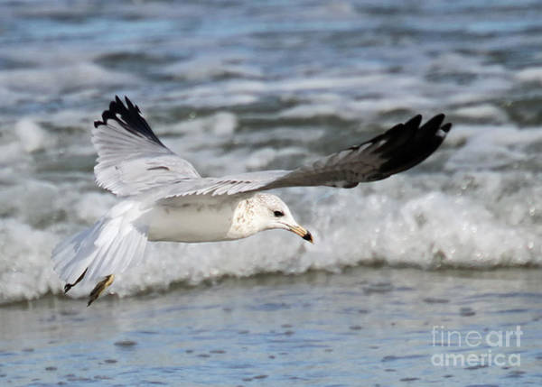 Photograph - Wind Beneath My Wings by Geoff Crego