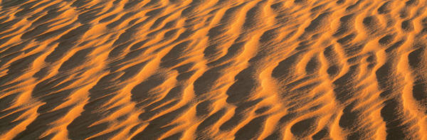 Windswept Photograph - Wind Blown Sand Tx Usa by Panoramic Images