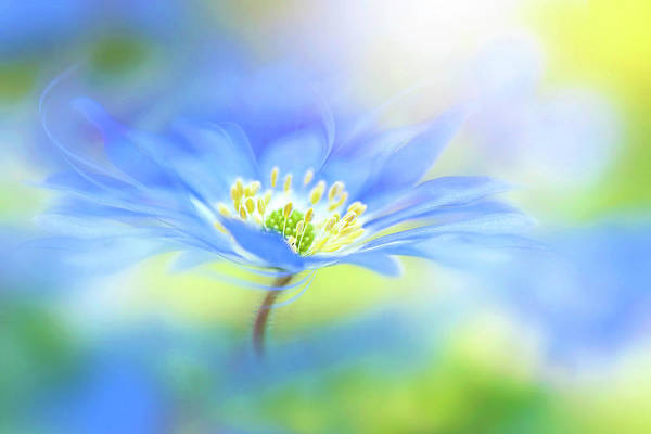 Wall Art - Photograph - Wind Flower by Jacky Parker