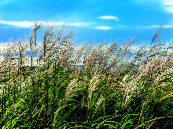 Photograph - Wind  by Kim Lessel