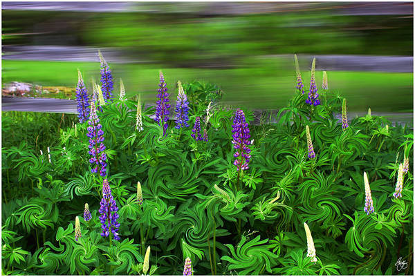 Photograph - Wind In The Lupine by Wayne King