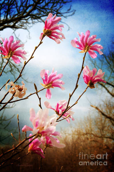 Wall Art - Photograph - Wind In The Magnolia Tree by Andee Design