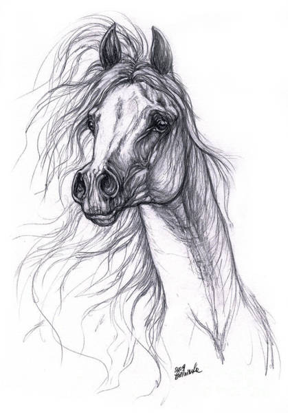 Arabian Drawing - Wind In The Mane 2 by Angel Ciesniarska