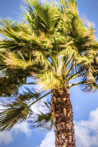 Photograph - Wind In The Palm Tree by  Onyonet  Photo Studios