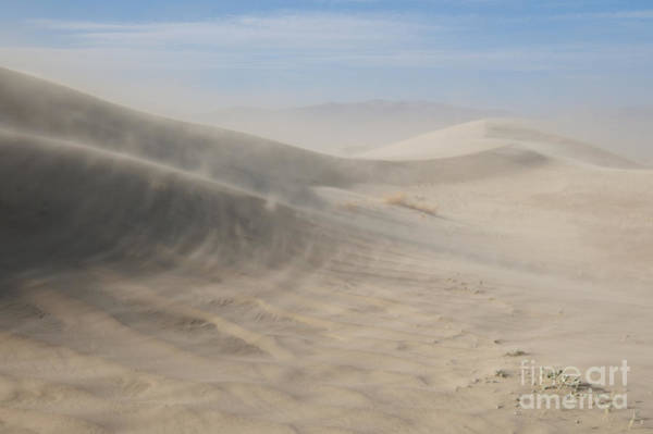 Photograph - Wind On Saline Valley Sand Dunes by Dan Suzio