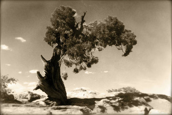 Needles Wall Art - Photograph - Wind Swept Tree by Scott Norris