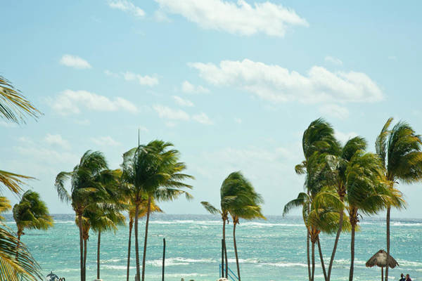 Quintana Roo Photograph - Windblown Coconut Palms Line This Beach by Brian Phillpotts