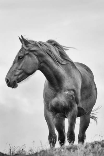 Photograph - Windblown Horse by Tracy Munson