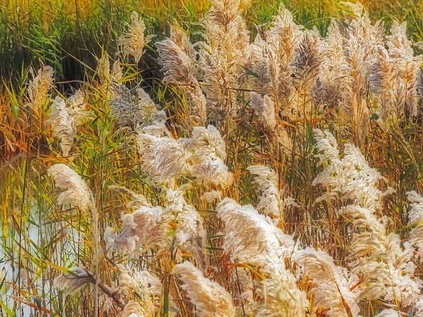 Photograph - Windblown by Robert Mitchell