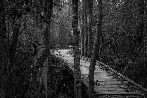 Photograph - Winding Bridge In The Woods by Kirkodd Photography Of New England