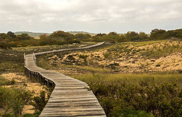 Photograph - Winding Path Over The Marshes by Nancy De Flon
