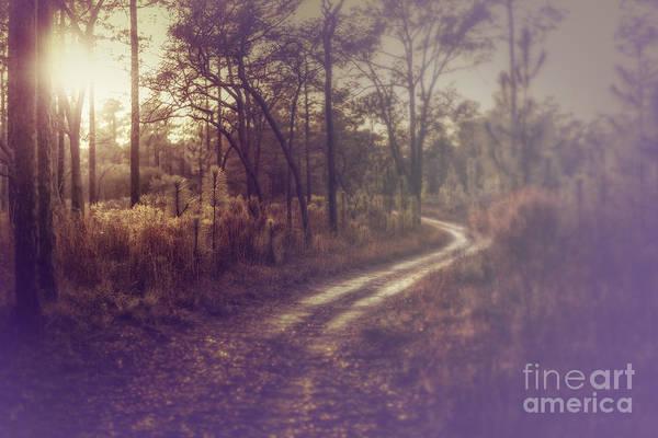 Winding Road Art Print