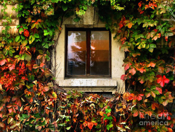 Photograph - Window And Autumn Ivy by Daliana Pacuraru