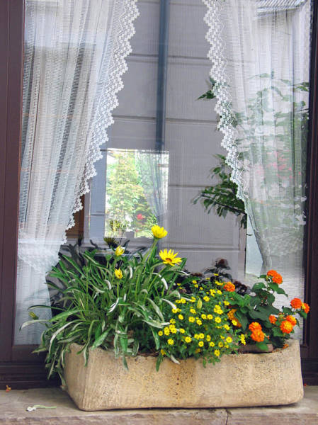 Photograph - Window Box by Gerry Bates