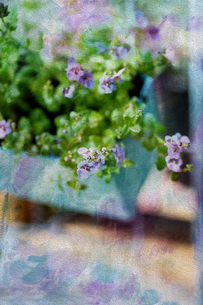 Oil Paint Photograph - Window Box by Rebecca Cozart