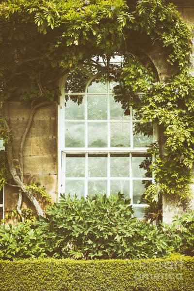 Window Pane Photograph - Window by Amanda Elwell